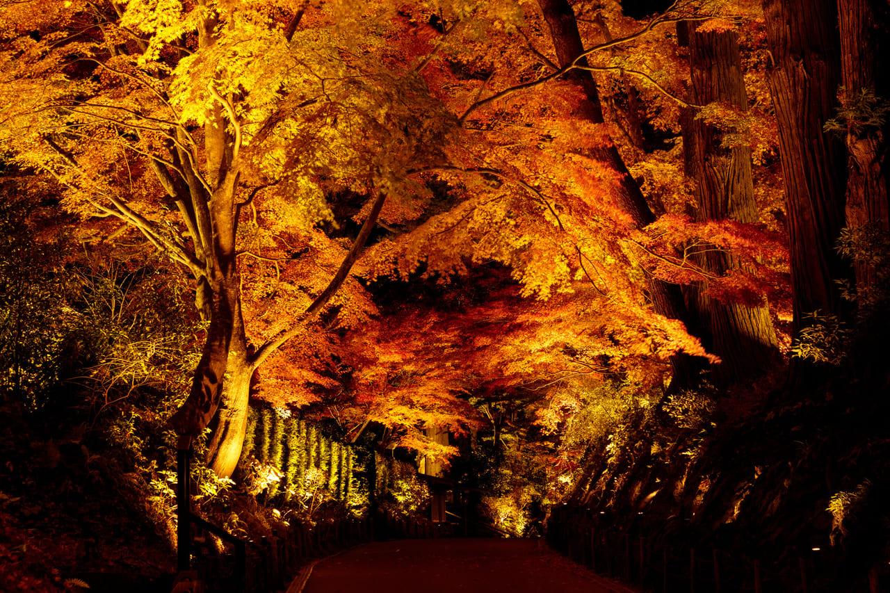 昭和記念公園秋のライトアップ